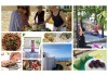8 Days Macrobiotic Raw Vegan Detox, Cooking Workshop, and Yoga Retreat in Crete, GREECE